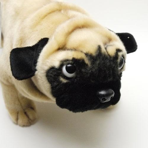 Aoneko Shouten Hansa Pag 35 Cm Hansa Pug Dog Stuffed Animals