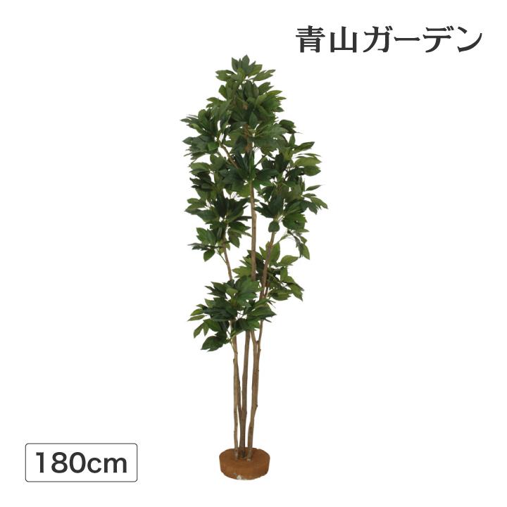 人工植物 造花 フェイク グリーン ディスプレイ 飾り タカショー 母の日 2019 / カクレミノ 鉢無 1.8m /C