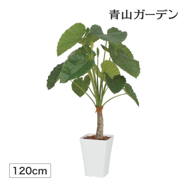 人工植物 造花 フェイク グリーン ディスプレイ 飾り タカショー 母の日 2019 / クワズイモ 1.2m /C