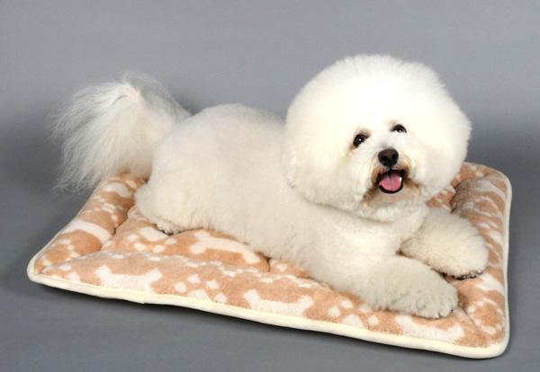 肉球+ボーン柄ウォッシャブル・マットSS(42×32cm)犬ベッドのappy dog写真のマットは、Mサイズ