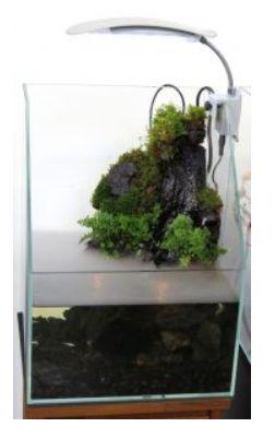 【JUN】熱帯魚 飼育用品 水槽セットクリアオガラスフレームレス水槽 クオリア900テラ高級テラリウム水槽