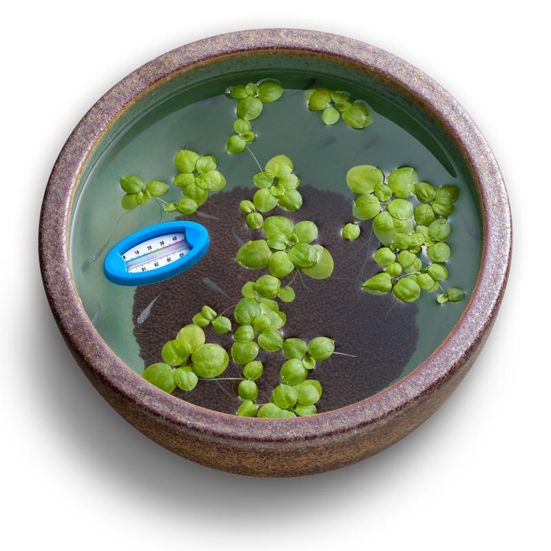 スドー 浮かべる水温計 『水温/湿度/室温計』