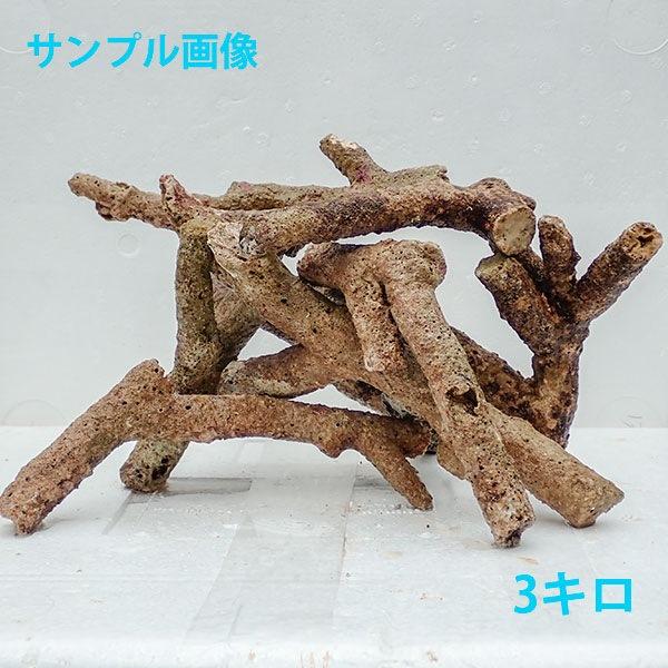 サンプル 太枝ライブロック 1kgの価格 毎日激安特売で 営業中です 発送の際の枝折れはご理解ください 石灰藻 信頼 キュア済み ライブロック