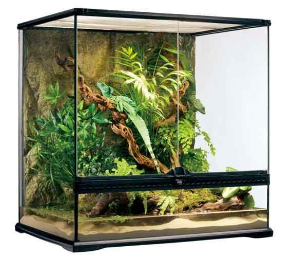 爬虫類 飼育 ケージ 爬虫類ケージ トカゲ 樹上性 リクガメ/ エキゾテラ グラステラリウム6060 PT2612 【別途送料加算となります】