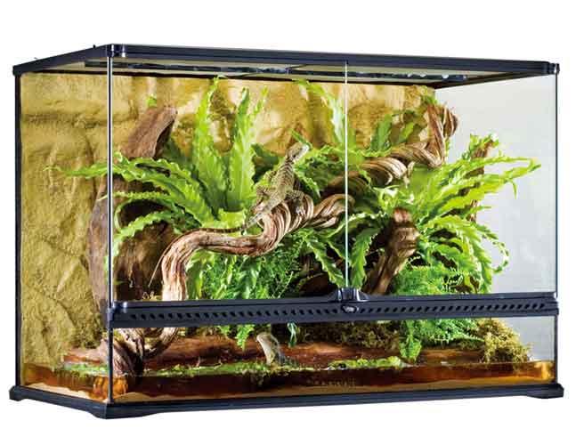 爬虫類ケージ/ エキゾテラ グラステラリウム9060 PT2614) ※大型商品の為、別途送料加算