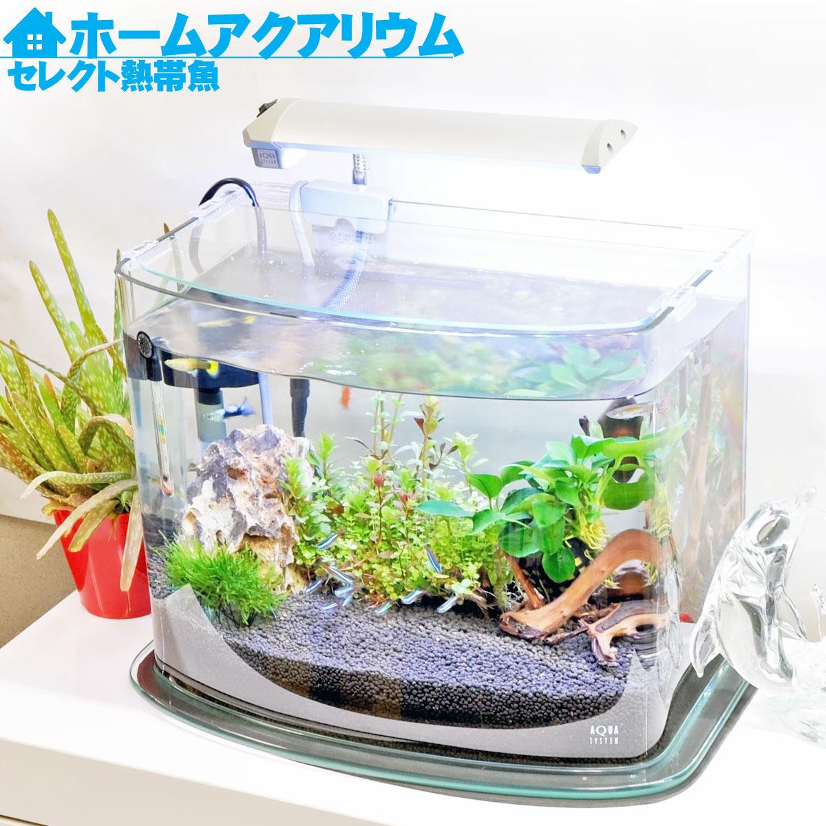 【送料無料】ホームアクアリウムオールセット セレクト熱帯魚 36cm水槽 飼育に必要なもの全てお届け 家族の団欒 インテリア 癒しに