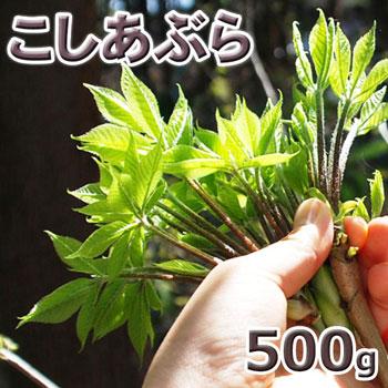コシアブラ500g予約販売天然・コシアブラ(10cm以下)500g(大小バラ詰め)※送料別(クール便)