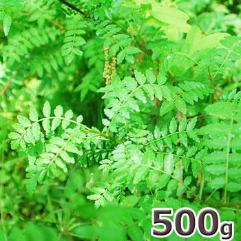 大きめ山椒の葉500g予約販売天然・大きめ山椒の葉(5cm~8cmくらい)500g(大小バラ詰め)※送料別(クール便)