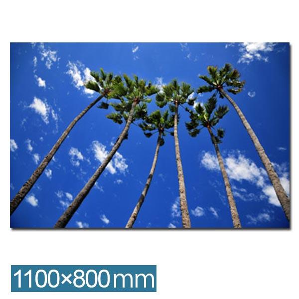 ポスター アートパネル パネル 壁 写真 インテリア 風景 フォトパネル アートフレーム フォトアート 壁掛け 写真パネル おしゃれ ディスプレイ 壁面装飾 リビング ダイニング 玄関 オフィス IAP51317 Group of palms カフェ プレゼント フレーム アートポスター