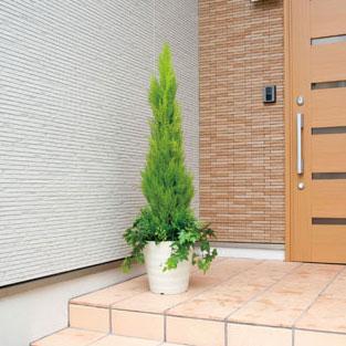 観葉植物 フェイクグリーン フェイク グリーン イミテーショングリーン アートグリーン 人工観葉植物 インテリアグリーン 人工植物 インテリア 植物 ゴールドクレスト 1.4 モダン アジアン オフィス カフェ
