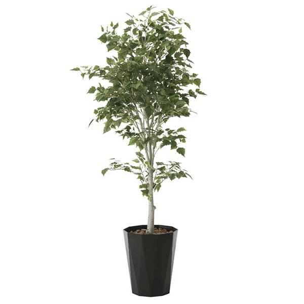 光触媒 観葉植物 イミテーション 植物 枯れない 人工観葉植物 インテリア 抗菌 記念日 フェイクグリーン ギフト 母の日 祝い 消臭 贈り物 高さ190cm フェイク 白樺1.9 おすすめ リビング