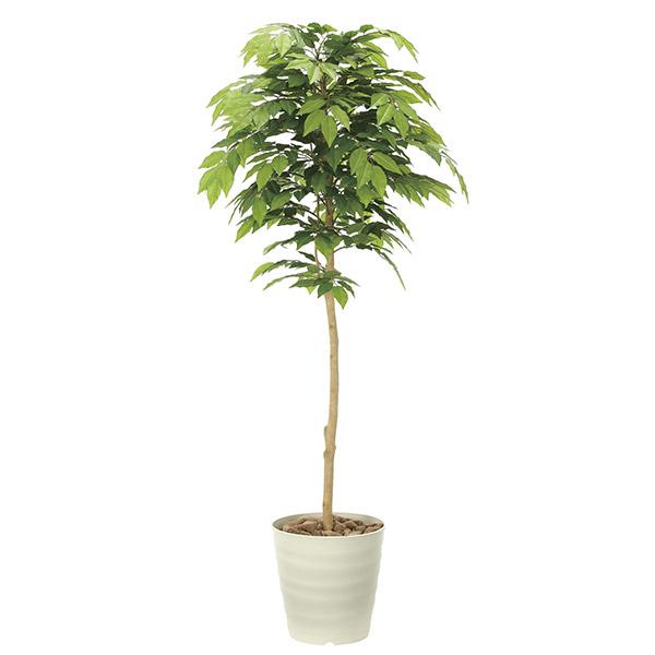 人工観葉植物 光触媒 観葉植物 フェイクグリーン インテリア 人工植物 高さ160cm 消臭 抗菌 防汚 ケヤキ
