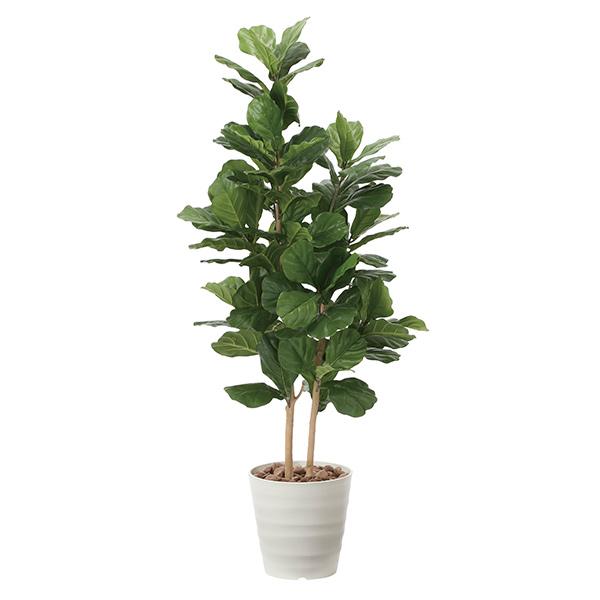 光触媒 観葉植物 植物 人工観葉植物 インテリア おしゃれ グリーン カシワバゴム 高さ160cm