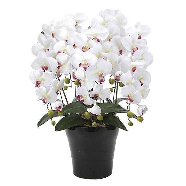 胡蝶蘭 光触媒 インテリア アートフラワー ギフト 造花 人工観葉植物 胡蝶蘭5本立 ホワイト