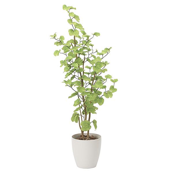光触媒 観葉植物 植物 人工観葉植物 インテリア おしゃれ グリーン バウヒニア 高さ160cm