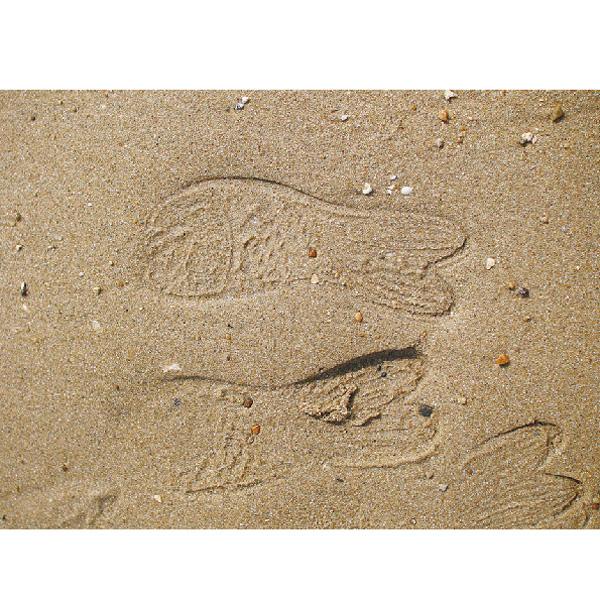 【NEW】サンダル レディース【 GOLD FISH SANDALS 】 お魚 サンダル ラバーサンダル レディース ゴールドフィッシュサンダル 単品 クロックス レディース のような履き心地 ビーチサンダル レディース スパイス/spice/アーニーバーニー/フリート/【RCP】