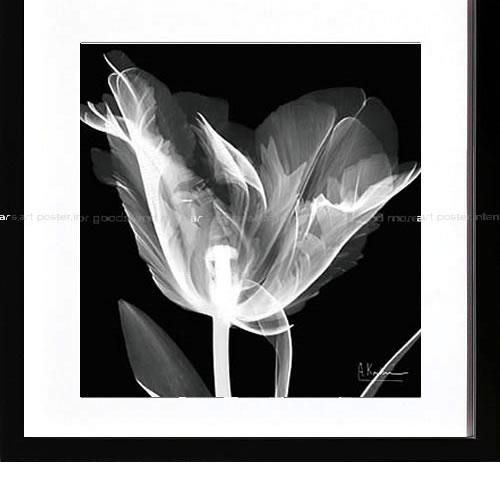 アートパネル アートポスター 絵画 インテリア ポスター タペストリー 壁掛け アートフレーム ウォールアート アートボード モノトーン モノクロ デザイナーズ アンティーク シンプル モダン 北欧 おしゃれレントゲンアート アルバート クーツィール Lusty Tulip