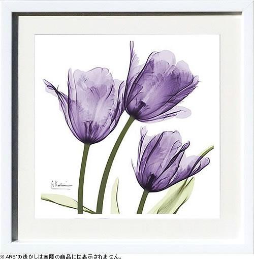アートパネル アートポスター 絵画 インテリア ポスター タペストリー 壁掛け アートフレーム ウォールアート アートボード モノトーン モノクロ デザイナーズ アンティーク シンプル モダン 北欧 おしゃれレントゲンアート アルバート クーツィール Purple Trio Tulips