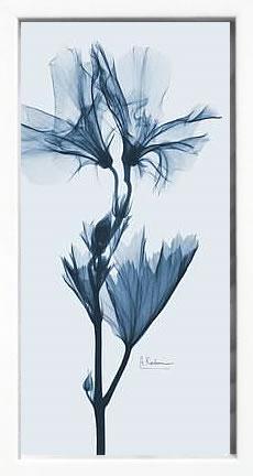 アートパネル アートポスター 絵画 インテリア ポスター タペストリー 壁掛け アートフレーム ウォールアート アートボード モノトーン モノクロ デザイナーズ アンティーク シンプル モダン 北欧 おしゃれレントゲンアート アルバート クーツィール Geranium in Blue