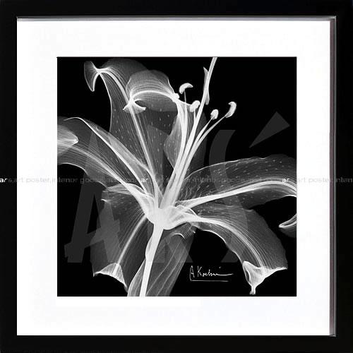 アートパネル アートポスター 絵画 インテリア ポスター タペストリー 壁掛け アートフレーム ウォールアート アートボード モノトーン モノクロ デザイナーズ アンティーク シンプル モダン 北欧 おしゃれレントゲンアート アルバート クーツィール Lily White on Black