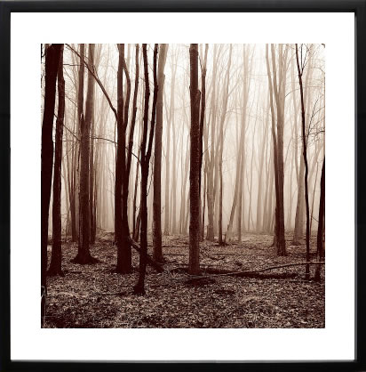 【絵画 アートパネル 壁掛け 専門店】アートフレーム/アートポスター エリン・クラーク Winter Woods(アートパネル アートフレーム アートポスター 北欧 絵画 インテリア ポスター 壁掛け)【0824カード分割】