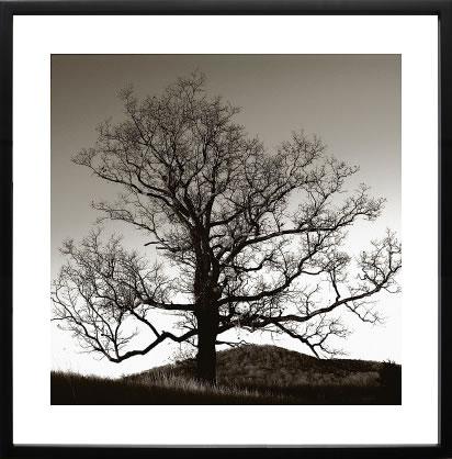 【絵画 アートパネル 壁掛け 専門店】アートフレーム/アートポスター エリン・クラーク Solemn Tree(アートパネル アートフレーム アートポスター 北欧 絵画 インテリア ポスター 壁掛け)【0824カード分割】
