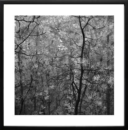 アートパネル アートポスター 絵画 インテリア ポスター タペストリー 壁掛け アートフレーム ウォールアート アートボード モダンアート モノトーン モノクロ アンティーク シンプル 北欧 おしゃれエリン クラーク Pine Bramble