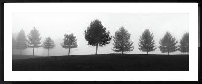 アートパネル アートポスター 絵画 インテリア ポスター タペストリー 壁掛け アートフレーム ウォールアート アートボード モダンアート モノトーン モノクロ アンティーク シンプル 北欧 おしゃれエリン クラーク Tree Line