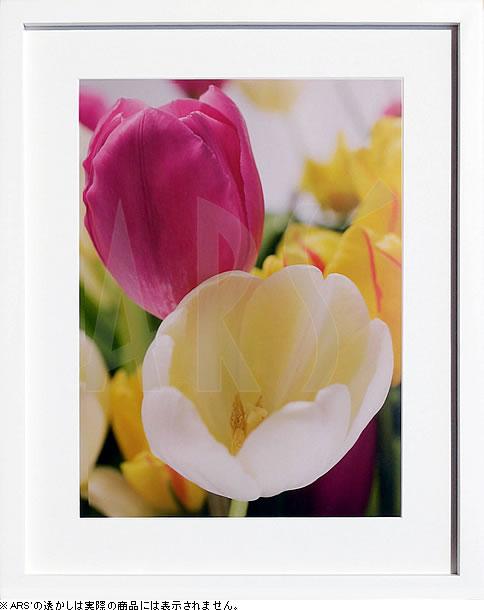 アートパネル アートポスター 絵画 インテリア ポスター タペストリー 壁掛け アートフレーム ウォールアート アートボード モダンアート モノトーン モノクロ アンティーク シンプル 北欧 おしゃれフォトグラフィアート イメージ ソース ブラック Tulips