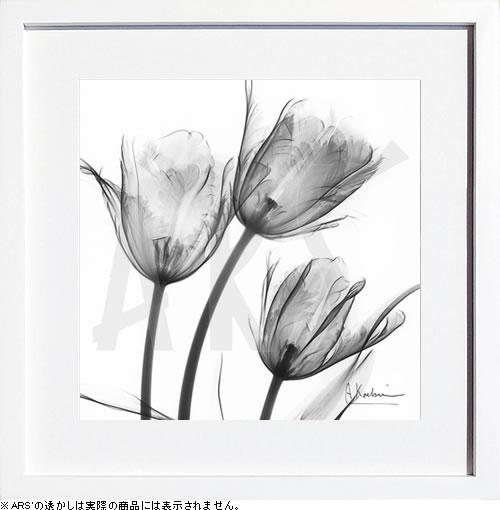 アートパネル アートポスター 絵画 インテリア ポスター タペストリー 壁掛け アートフレーム ウォールアート アートボード モノトーン モノクロ デザイナーズ アンティーク シンプル モダン 北欧 おしゃれレントゲンアート アルバート クーツィール Three Tulips