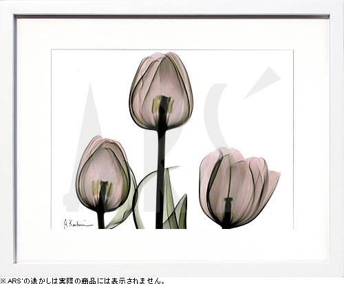 アートパネル アートポスター 絵画 インテリア ポスター タペストリー 壁掛け アートフレーム ウォールアート アートボード モノトーン モノクロ デザイナーズ アンティーク シンプル モダン 北欧 おしゃれレントゲンアート アルバート クーツィール Trio of Tulips II