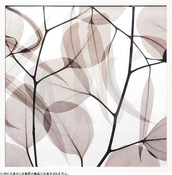アートパネル アートポスター 絵画 インテリア ポスター タペストリー 壁掛け アートフレーム ウォールアート アートボード モダンアート モノトーン モノクロ アンティーク シンプル 北欧 おしゃれレントゲンアート スティーヴン メイヤーズ Eucalytus Leaves(Positive)