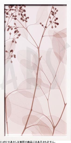 アートパネル アートポスター 絵画 インテリア ポスター タペストリー 壁掛け アートフレーム ウォールアート アートボード モダンアート モノトーン モノクロ アンティーク シンプル 北欧 おしゃれレントゲンアート スティーヴン メイヤーズ EucalyptusII