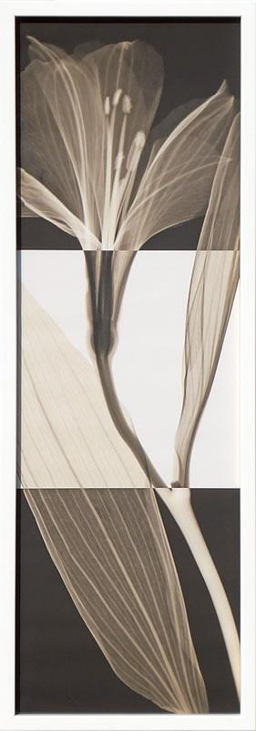 アートパネル アートポスター 絵画 インテリア ポスター タペストリー 壁掛け アートフレーム ウォールアート アートボード モダンアート モノトーン モノクロ アンティーク シンプル 北欧 おしゃれレントゲンアート スティーヴン メイヤーズ Peruvian Lily I