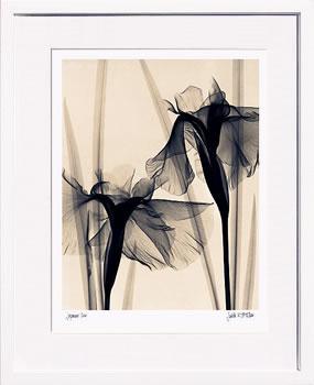 アートパネル アートポスター 絵画 インテリア ポスター タペストリー 壁掛け アートフレーム ウォールアート アートボード モダンアート モノトーン モノクロ アンティーク シンプル 北欧 おしゃれレントゲンアート ジュディス マクミラン Japanese Iris