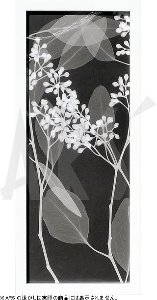 アートパネル アートポスター 絵画 インテリア ポスター タペストリー 壁掛け アートフレーム ウォールアート アートボード モダンアート モノトーン モノクロ アンティーク シンプル 北欧 おしゃれレントゲンアート スティーヴン メイヤーズ Eucalyptus IV