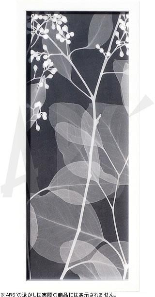 アートパネル アートポスター 絵画 インテリア ポスター タペストリー 壁掛け アートフレーム ウォールアート アートボード モダンアート モノトーン モノクロ アンティーク シンプル 北欧 おしゃれレントゲンアート スティーヴン メイヤーズ Eucalyptus V