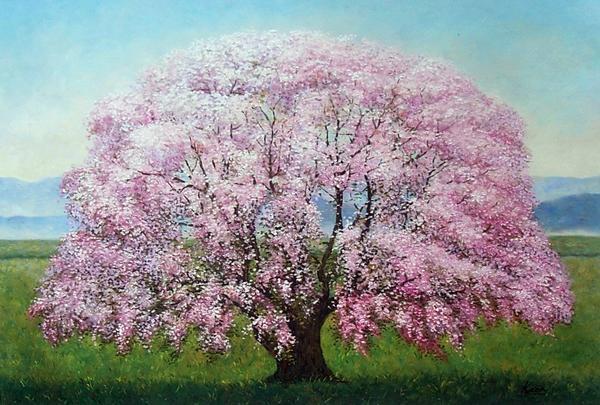 特価油絵 枝垂れ桜