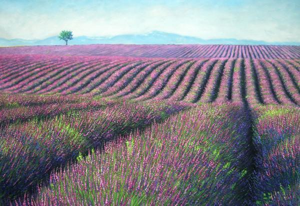 油絵 南仏のラベンダー畑