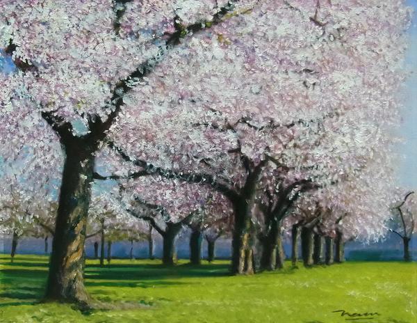 特価油絵 桜並木