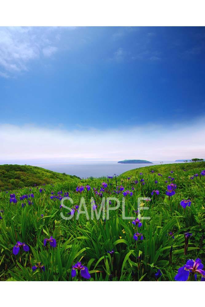 ポスター インテリア 壁飾りに美しい風景写真を ディスプレイ 安値 模様替えに最適 2LW写真 2LW-71 人気上昇中 北海道あやめヶ原 ギフトや記念日のプレゼントなどにも