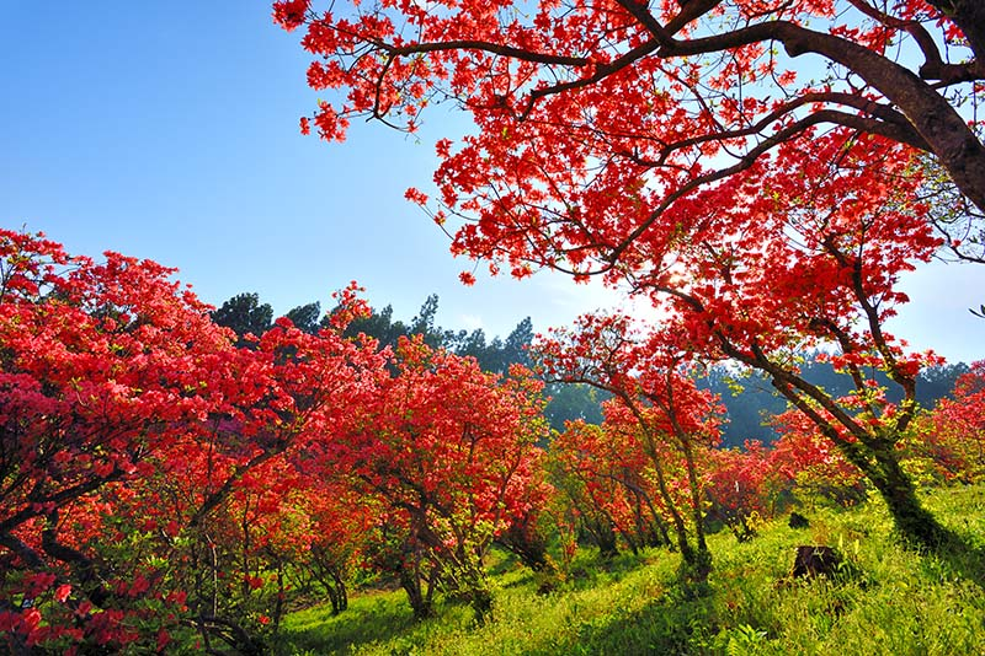 風呂山公園/つつじ1 福島 風景写真パネル72.7×50cm fry-001-m20アート ポスター 風景,絵画 アート,絵画 壁掛け アート,タペストリー 壁掛け,インテリア アートパネルの壁飾り,お祝いギフトに