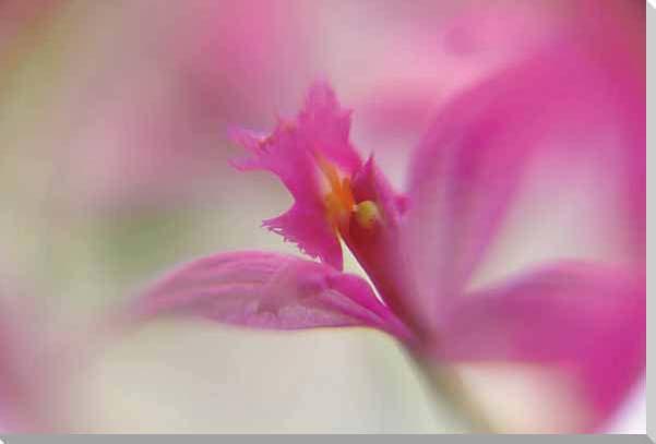 花 蘭 風景写真パネル