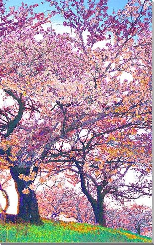 桜 CG キャンバス地 写真パネル 53×33.3cm CG-02-M10 ギフト 贈り物 インテリアアート アートフォト