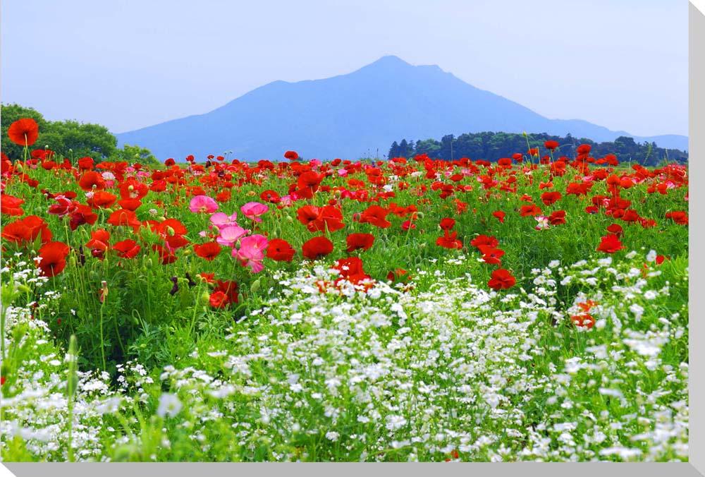 筑波山とポピー 風景写真パネルクロス地