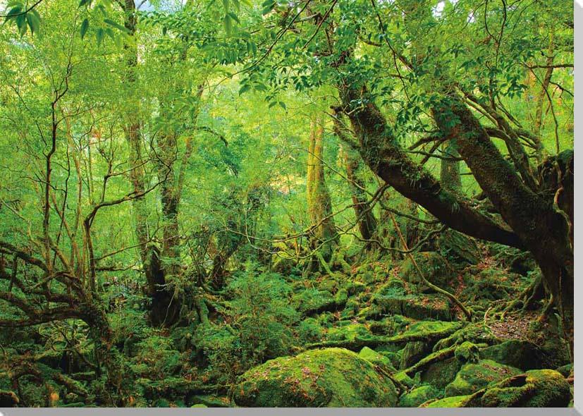 お祝いギフトに 額要らずの壁飾り インテリア 壁掛け アート パネル ポスター 訳あり 風景 風景写真パネルクロス地 絵画 22.7×45.5cmCLO-YAK-01-M3 屋久島もののけ姫の森1 写真パネル 豊富な品