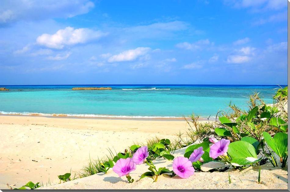 格安 価格でご提供いたします プレゼント ギフト 贈答品 返礼 お祝い 結婚 新築 引っ越し 誕生日 記念日 年祝い 風景写真パネル 沖縄 波照間島の海とハマヒルガオ 店内限界値引き中&セルフラッピング無料 ニシ浜 空 雲 砂浜 ボタニカル ウォールデコ 白い雲 雰囲気作り 南の島 グラフィック リフォーム インテリア HTR-076-M10 風水 波 額要らず ビーチ 模様替え 壁掛け 壁飾り アートパネル