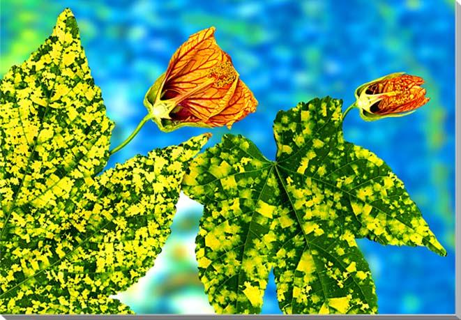 アブチロン 花 CG写真パネル 60.6×41cm CG-007-M12 ギフト 贈り物 インテリアアート アートフォト
