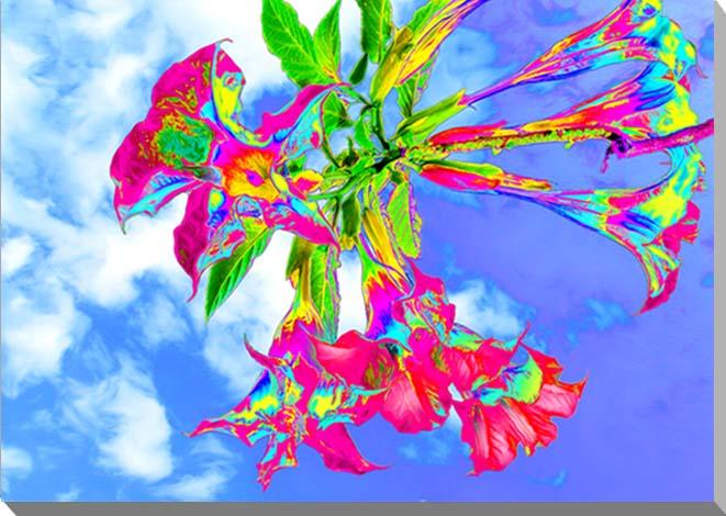 エンゼルトランペット 花 CG写真パネル 72.7×53cm CG-009-P20 ギフト 贈り物 インテリアアート アートフォト
