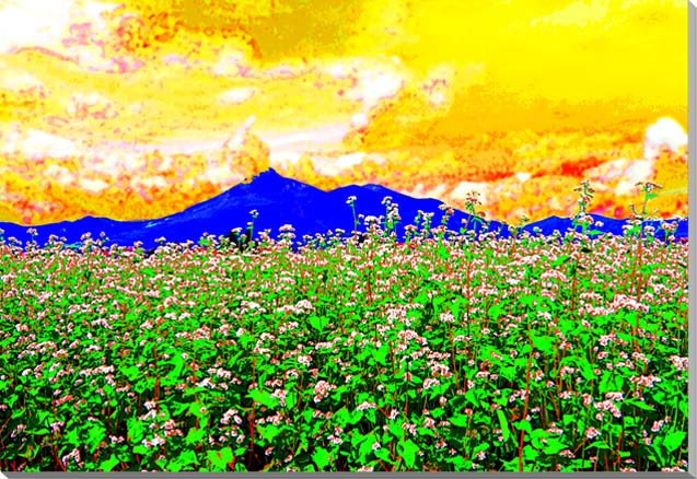 磐梯山と蕎麦の花 福島 CG写真パネル 65.2×45.5cm CG-043-M15
